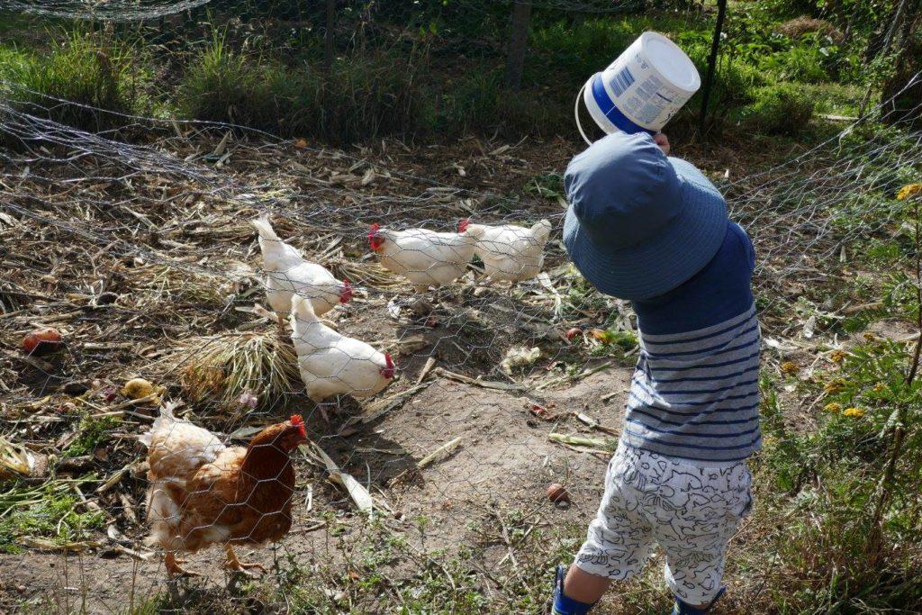 Chicken feeding at Elvenhome